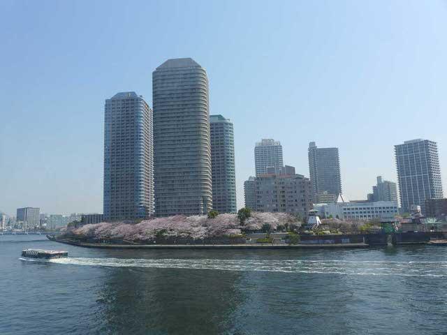 V_blossomsflowerwindow.jpg